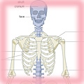 The human skeleton with axial skeleton in blue